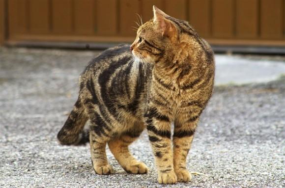cat5_e0