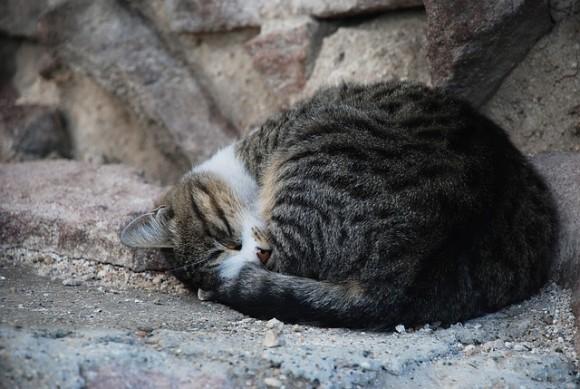 cat1_e0