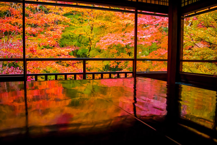 黒塗り机の天板に「瑠璃の庭」の絢爛たる紅葉が映るリフレクション風景が人気