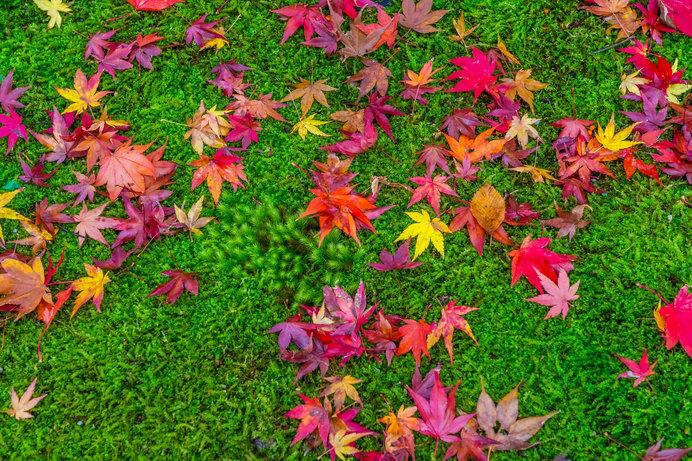 芝や常緑樹と紅葉のコントラストも美しいですよね!