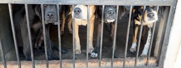 dogs-656767_640_e