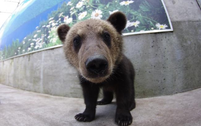 昭和新山熊牧場の可愛い子熊さん
