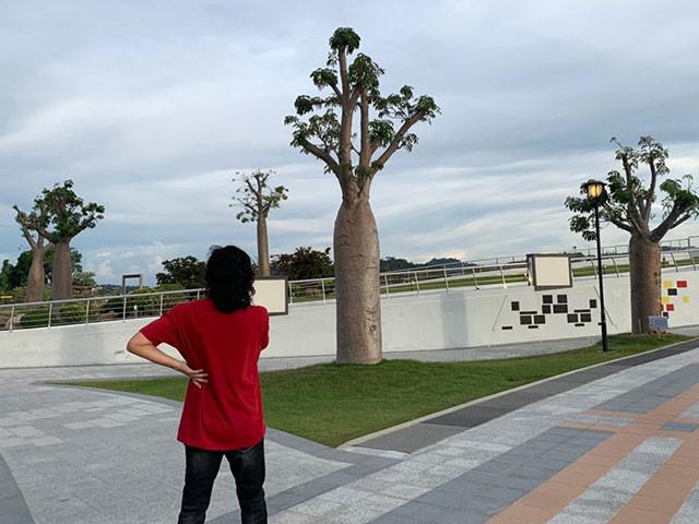 整然とした公園にはたくさんのバオバブの木が生えている