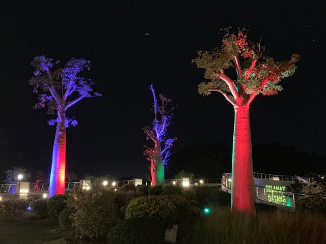 夜になるとライトアップもされるバオバブの木