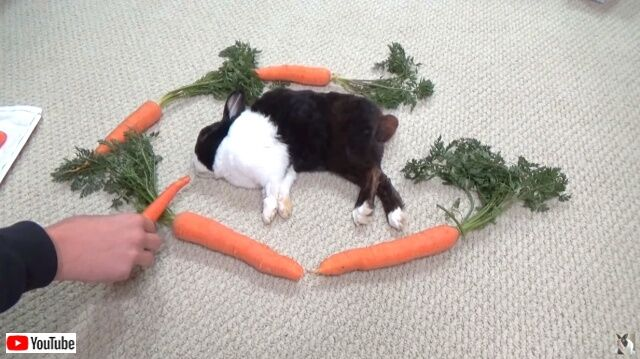rabbitwcarrots3_640