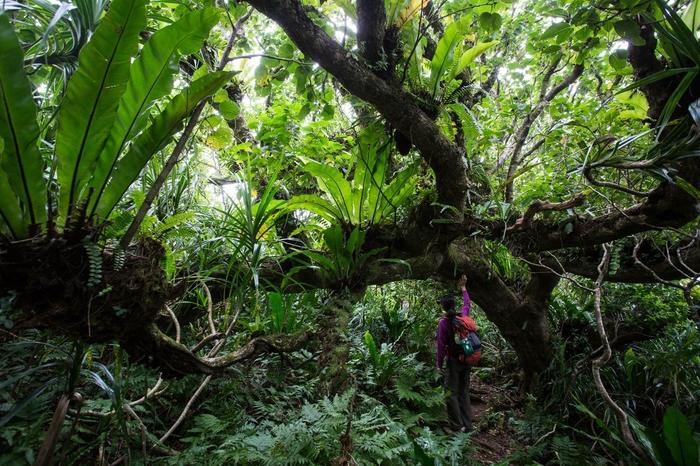 母島 固有種の森