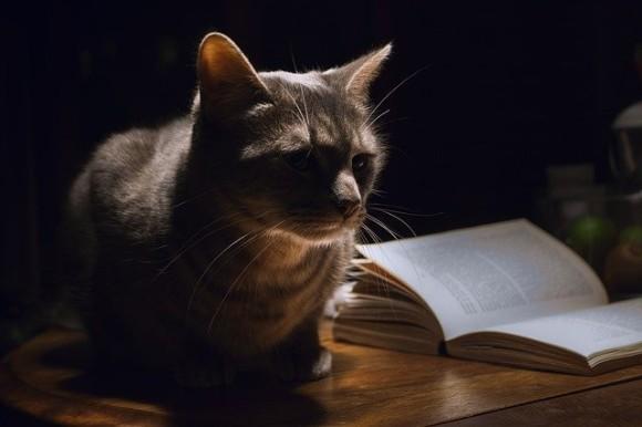 cat-1649955_640_e