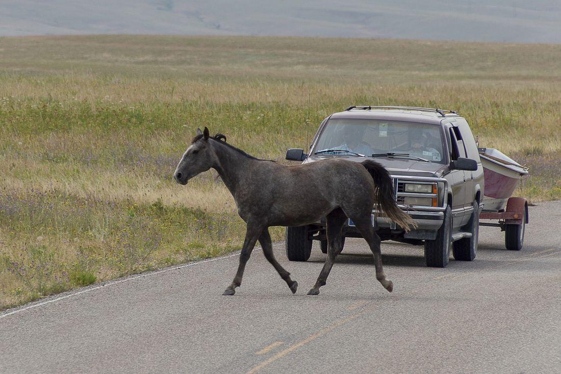 車道を横切る馬