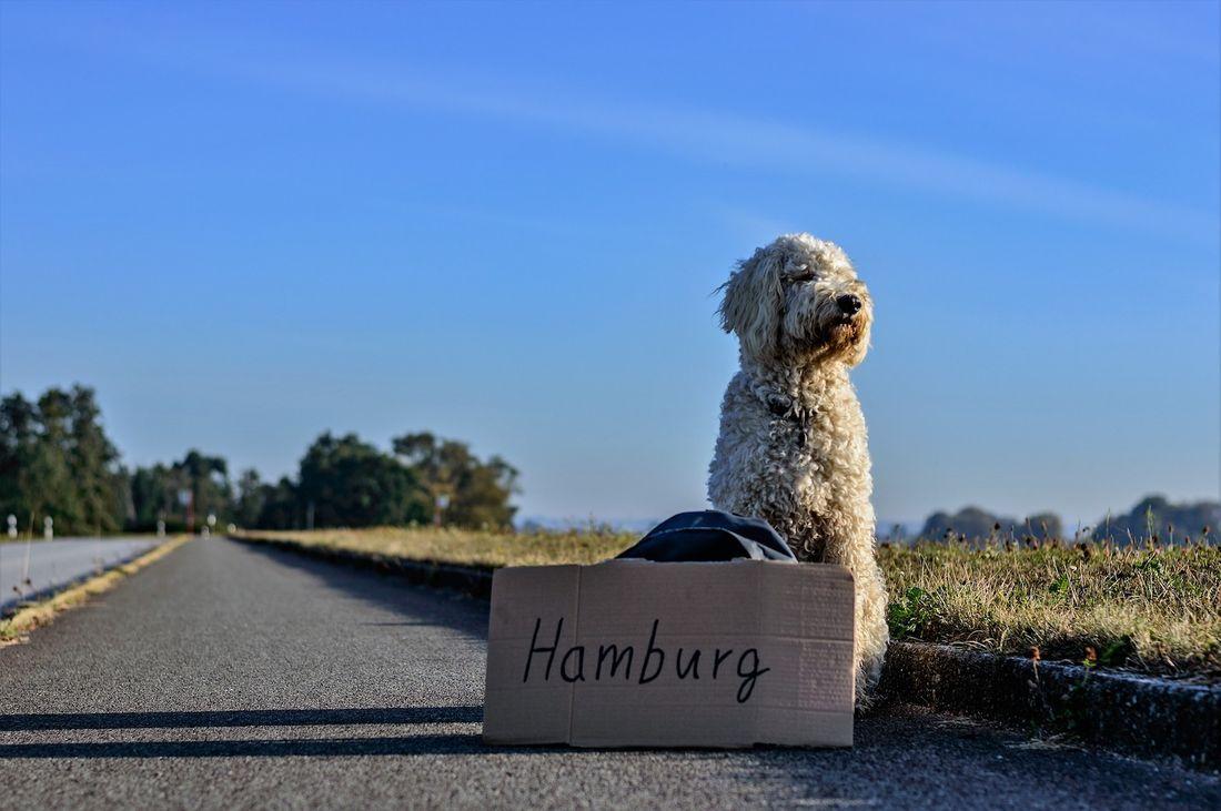 ヒッチハイク 犬 道路
