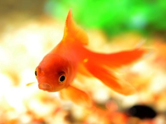 fish-881161_640_e