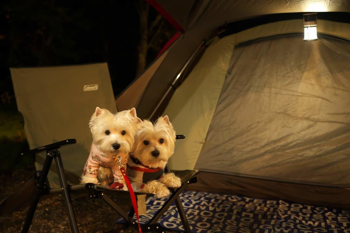 ペット同伴OKのキャンプ場やフェリーが増加! プロが教える「愛犬・愛猫と泊まる宿泊施設でのマナーとルール」