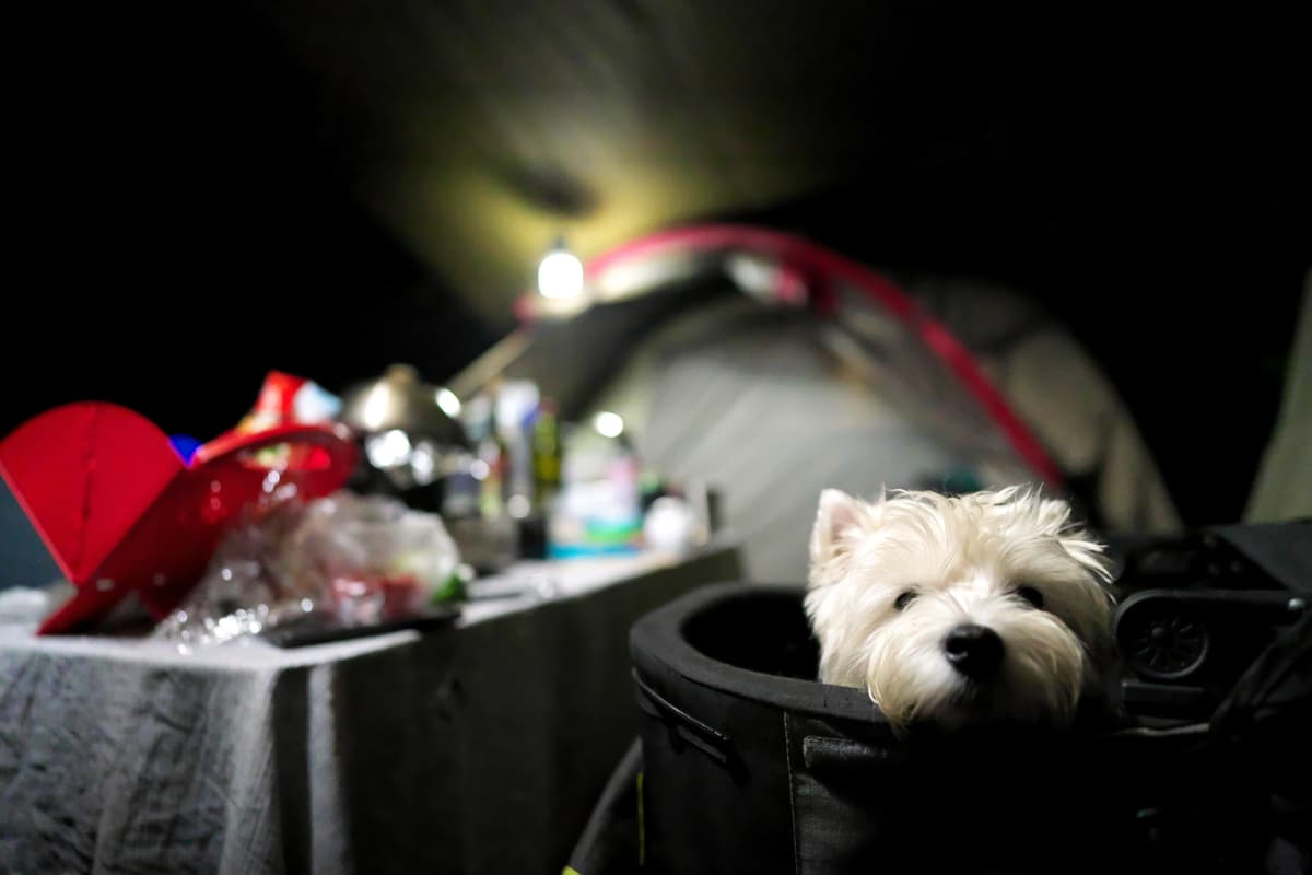 キャンプ場やフェリーでもペット同伴OK