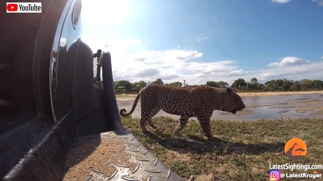 goproinsavannah3_640