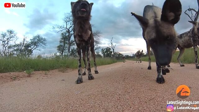 goproinsavannah2_640