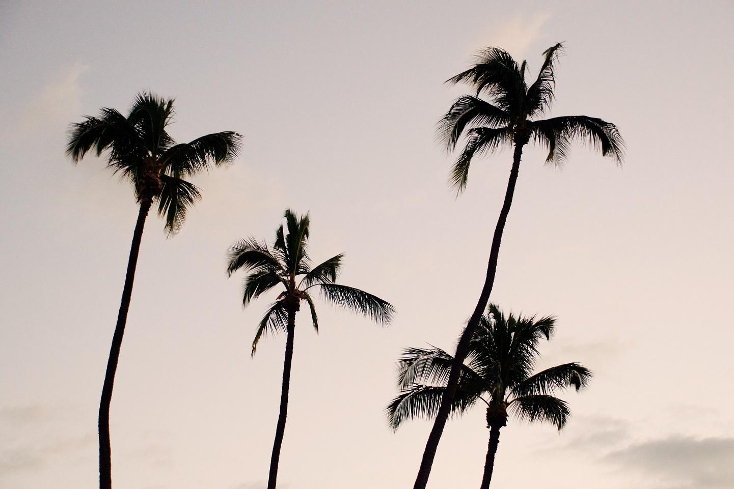 ハワイ_現状