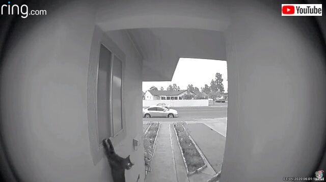 doorbell4_640