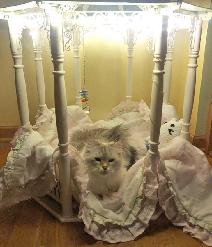 猫ファースト