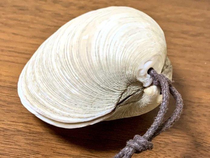 貝は「ホンビノス貝」を使用(画像はオギナミ(@oginami1118)さんから)