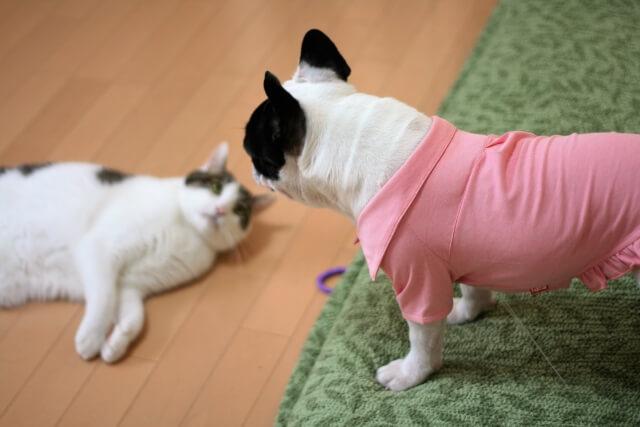 喧嘩で劣勢に立たされながらお腹を見せる猫のイメージ写真