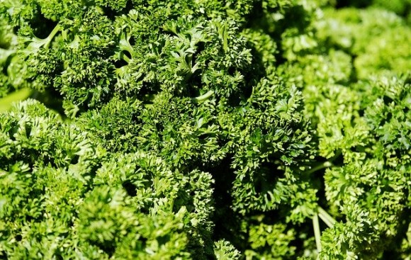 parsley-3267600_640_e
