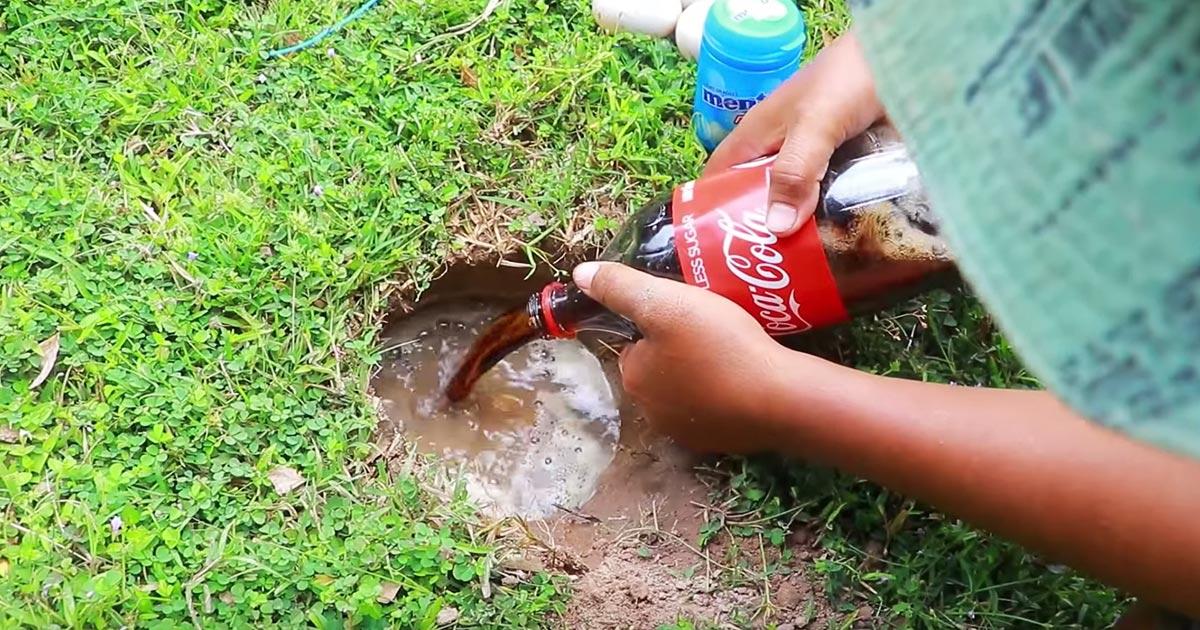 メントス コーラ 魚
